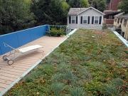 Telhados verdes podem refrescar Cidades